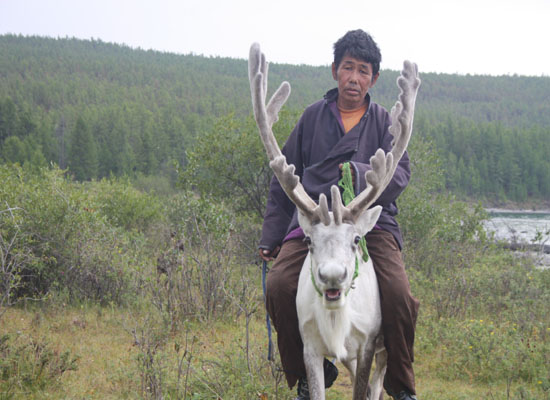 Exploring Mongolia 550 400